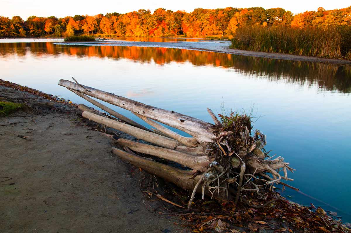 Fall in Rouge Park by Eddar27 / Wikipedia